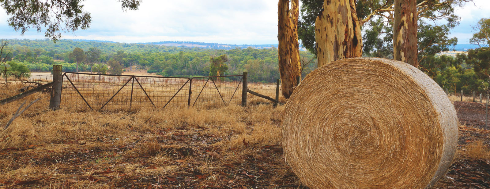 hay bale and field